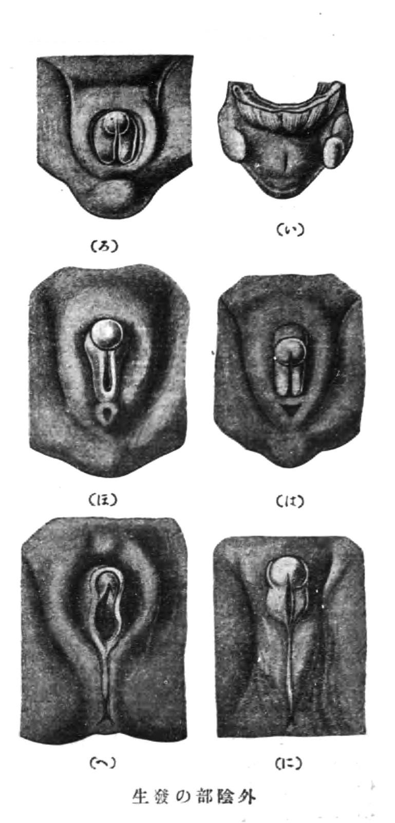 campbell 生物 學 第 八 版