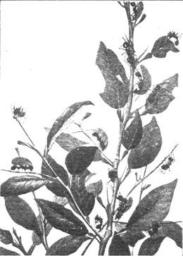 Hakiriari