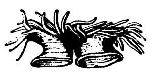 Isogintyakubunnretu