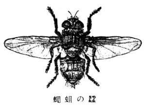 Kaikonoujibae