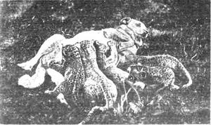 Hyounititiwonomaseruinu