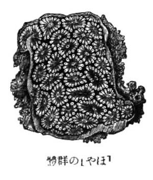 Hoyanobguntai