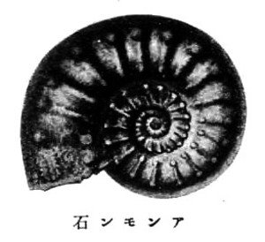 Anmonaite