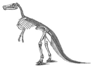 Large_marsh_claosaurus