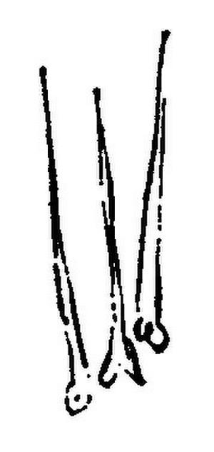 Sisyoukakopen
