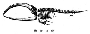 Kujirakokkaku