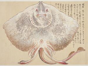 Gangihukubu