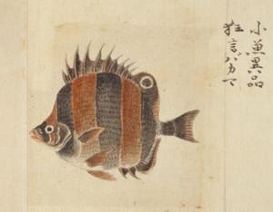 Kyougenbakama