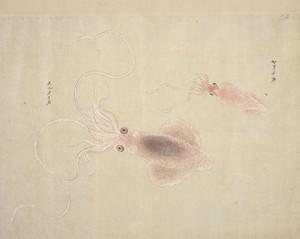 Yariikasurumeika
