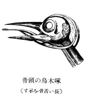 Kitutukitoukou
