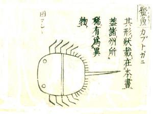 Yamatohonzouhuzukabutogani