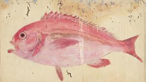 Akazagi
