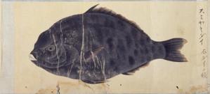 Sumiyakidai2