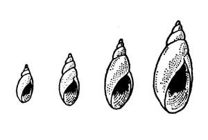 Monoaragai