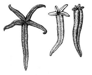 Hitodenosaisei