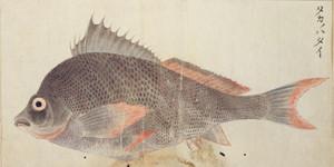 Takanohadai