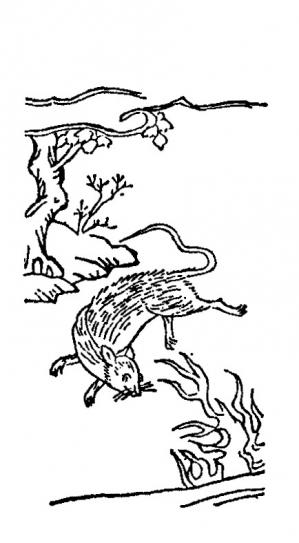 Hinezumi