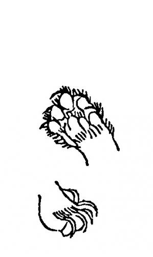 Mikukyuu