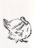七面鳥   Dindes
