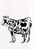 牝牛   La Vache