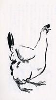雌鶏   la Poule