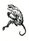 猿   Singes…