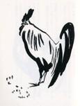 雄鶏   Coqs 2
