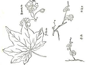 Hatiboku