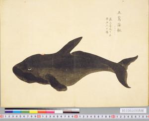 Kotokujira1