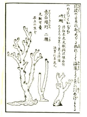 Gyokuseki1