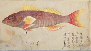 Himekodai2