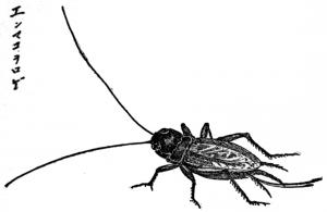 Emmakororogi
