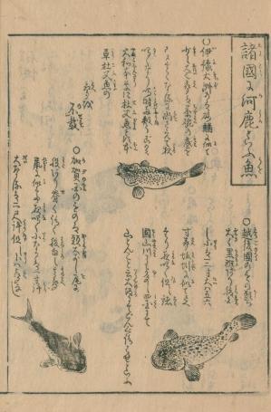 Kajikazu1