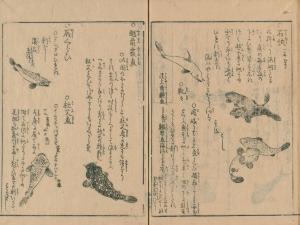 Kajikazu2
