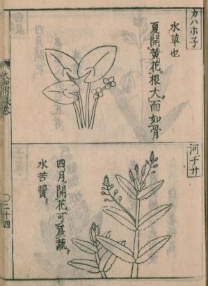 Kawahonekawajisya