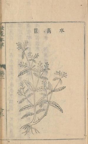 Kawajisya1