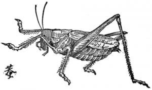 Kirigirisu