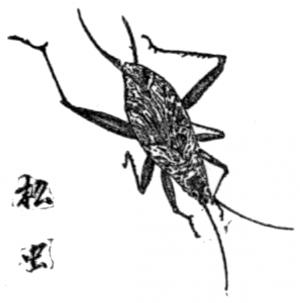 Matumushi