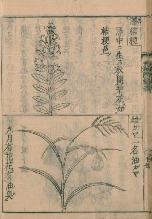Sawagikyoumegaya