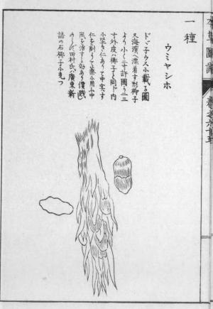 Umiyasiho