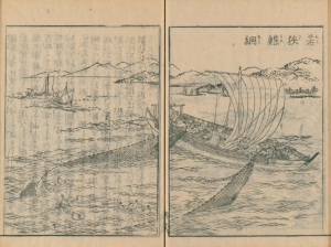 Wakasakarei