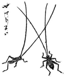 Yamatosuzu